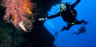 PADi Divemaster internship in Philippines