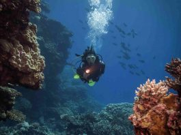 adventure in diving program philippines