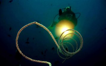 try-night-dive-scuba-philippines