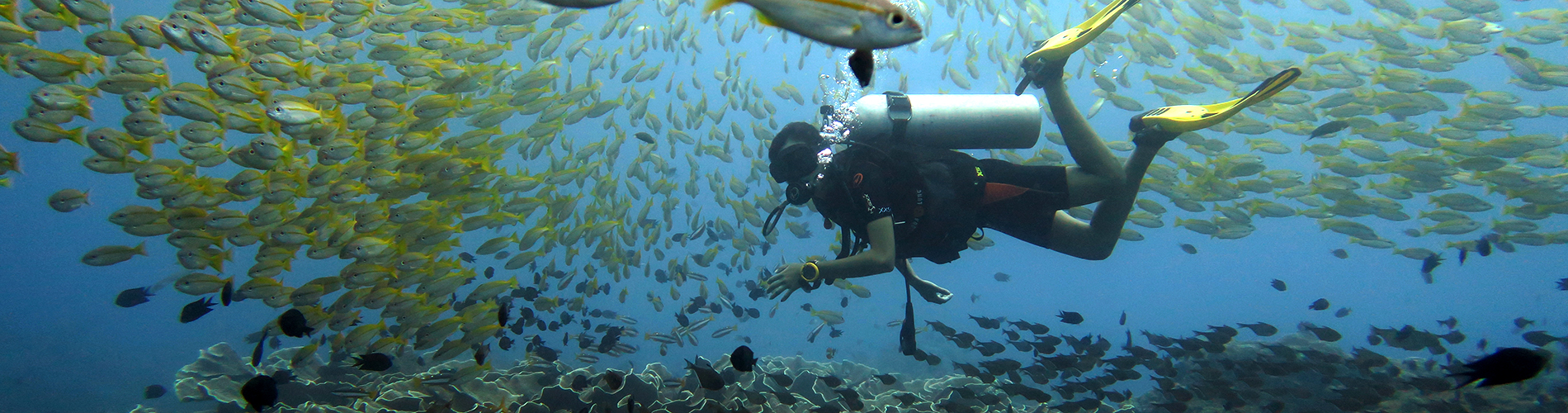 palawan divers open water course