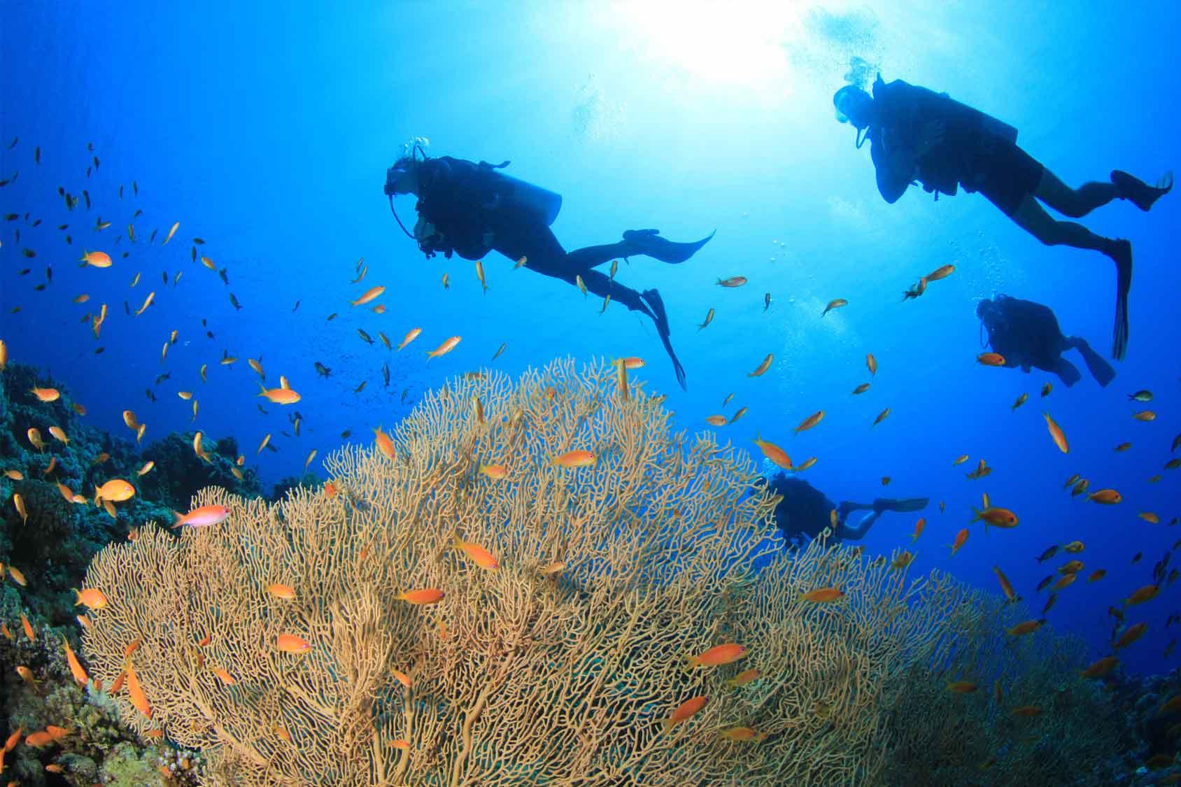 水肺潜水_Scuba diving in El Nido - Philippines